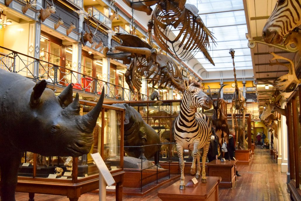 The Natural History Museum, in Dublin, os a great place to take kids who are interested in animals and nature! Click for more!