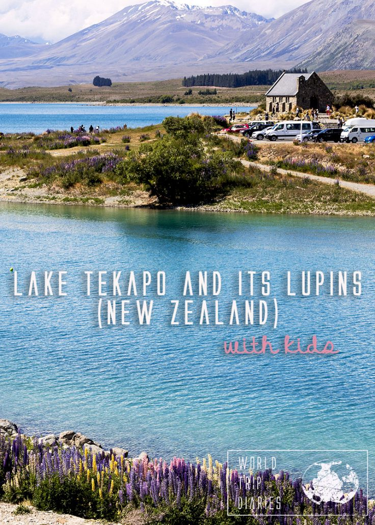 A visit to Lake Tekapo (NZ) is in most people's bucket lists. We visited it with kids while the lupins were blooming so here's our guide to Lake Tekapo and its lupins (New Zealand).