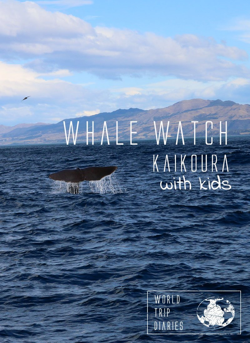 Whale watching is one of the most exciting moments in ones' life! Whale Watch Kaikoura, NZ, was a perfect family activity! Click to read more! #kaikoura #whalewatch #newzealand #visitnz #familytravel