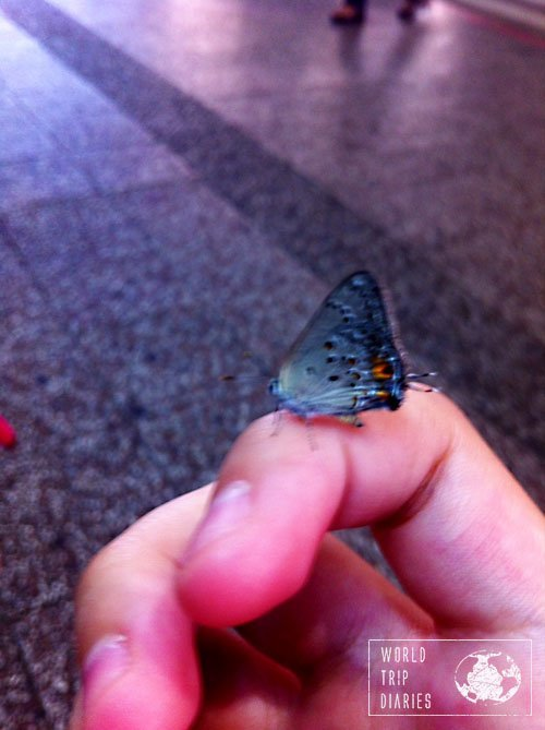 blue moth montevideo uruguay