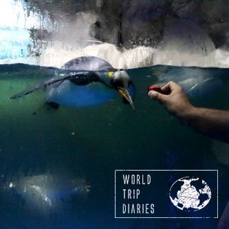 Kelly Tarlton Aquarium Auckland Nz With Kids Guide