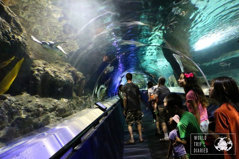 The shark tunnel in Kelly Tarlton's Sea Life Aquarium is one of the prettiest parts. Keep your eyes open and try to find as many creatures as you can!