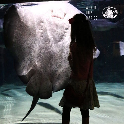Kelly Tarlton's Sea Life Aquarium has some huge sting rays. Their feeding time was very amusing.