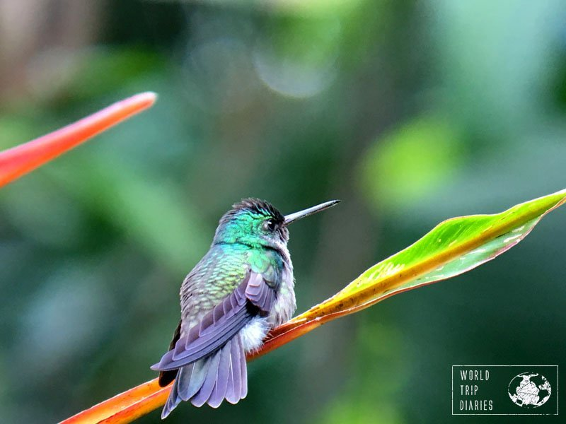 Manuel Antonio (Costa Rica) is also home to a number of hummingbirds! It's highly family friendly!