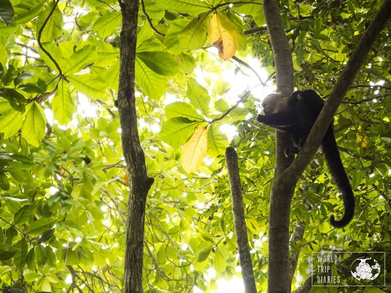 Nicaragua and Costa Rica have their monkeys. We didn't see any in Nicaragua, but in Costa Rica we did - and a lot.
