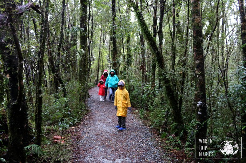 4 of us wearing different color rain coats in midst of trees on the path from the car park to the bay of Milford Sounds. There were just so many sandflies! In NZ.