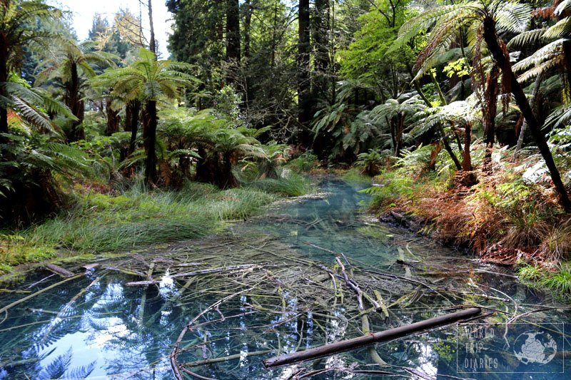 A blue water creek lined with lush trees - in Redwood, NZ. Even though it's beautiful with its blue waters, it smelled pretty bad.