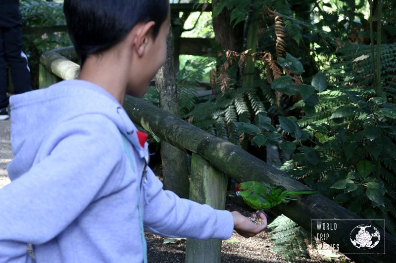 We visited Otorohanga Kiwi House (NZ) with kids and we share all about it! Click for more!