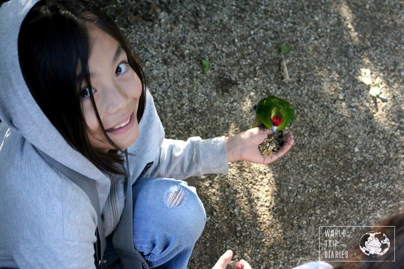 Feeding wild birds in NZ with kids is easily done in Otorohanga Kiwi House!