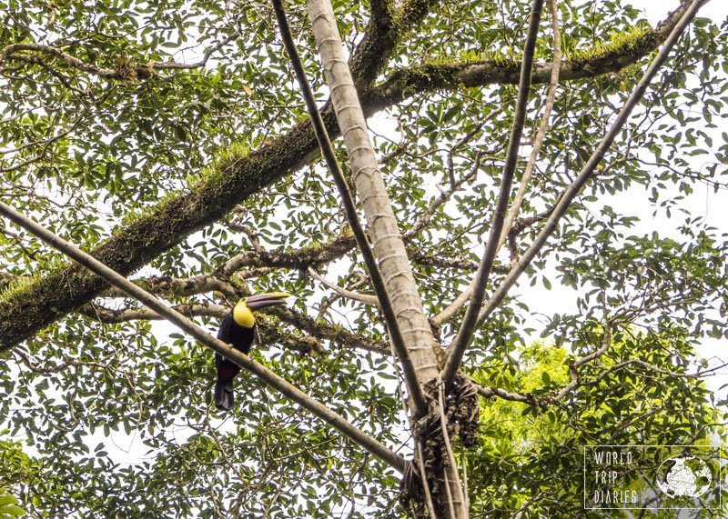 Toucans were the biggest birds we saw flying around the house in Punta Uva. The kids had fun bird watching.
