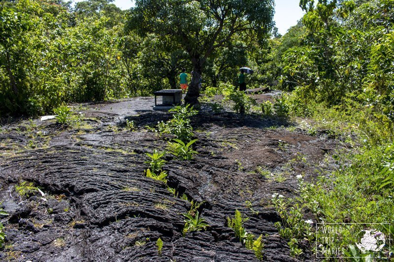 Saleaula Lava Fields in Savaii (Samoa). The floor is covered in solidified lava, now all black with patterns showing the motion of the lava. Nowadays, it has plants growing here and there. It's a wonderful sight!