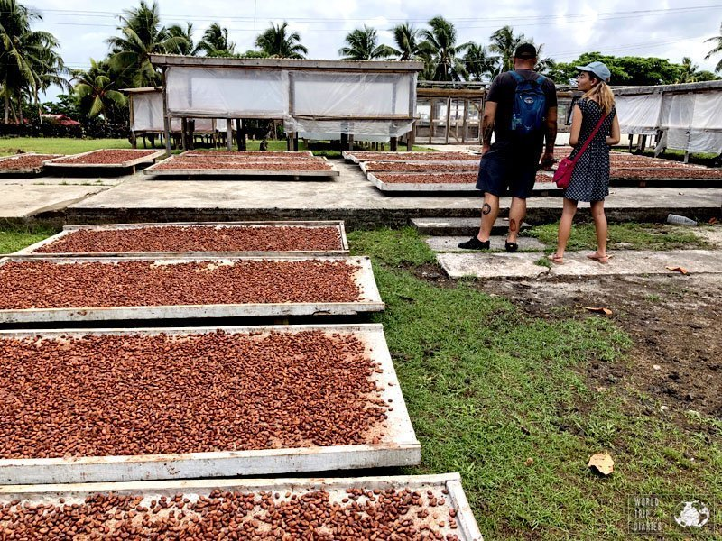 Cocoa beans laid on trays, drying under the Samoan sun. Watching the process of the making of cocoa was very interesting! Click for more!
