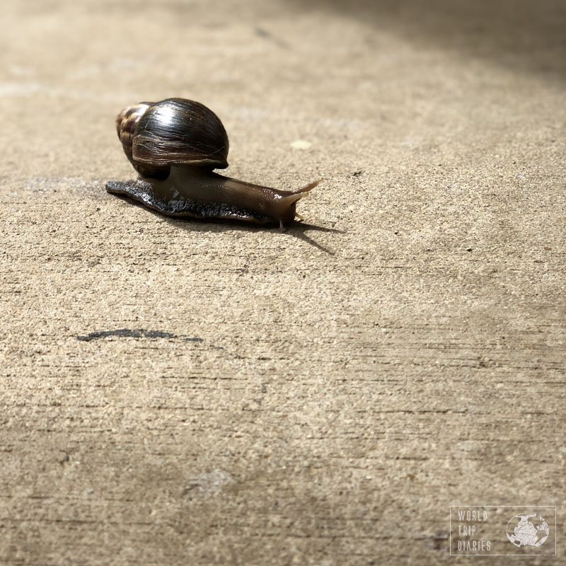 A snail in a hotel in Samoa. If you don't like these creatures, then maybe Samoa isn't for you!