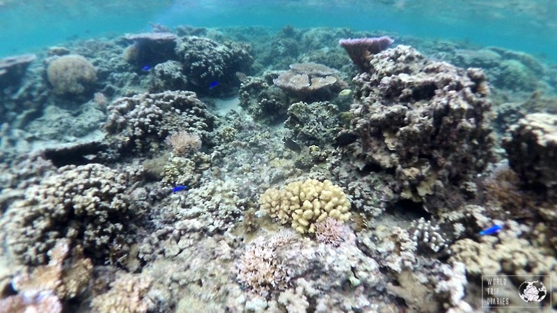 Palolo Deep Marine Reserve in Samoa is the perfect place to snorkel! Calm and crystal clear waters and some amazing collection of corals and sea creatures!