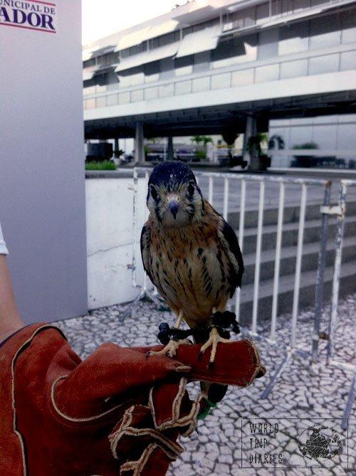 falcon handling