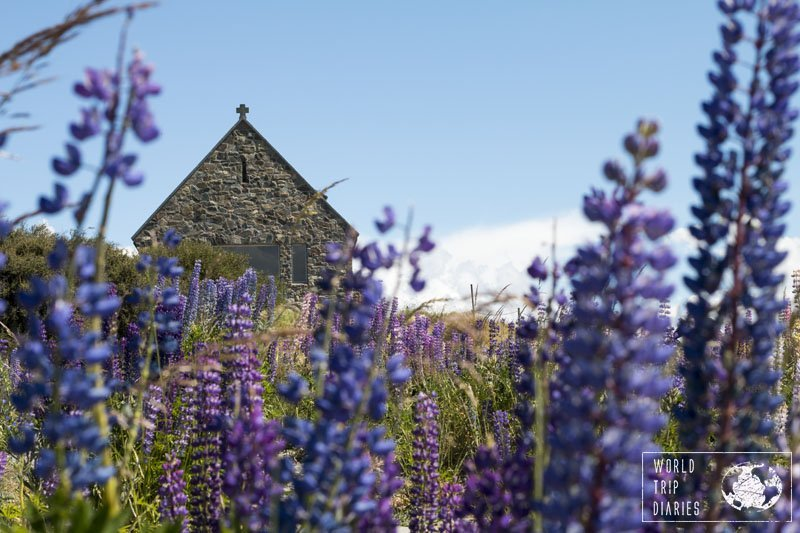 The lupins around Lake Tekapo, the blue waters, and the small church make the place a perfect destination for photographers!