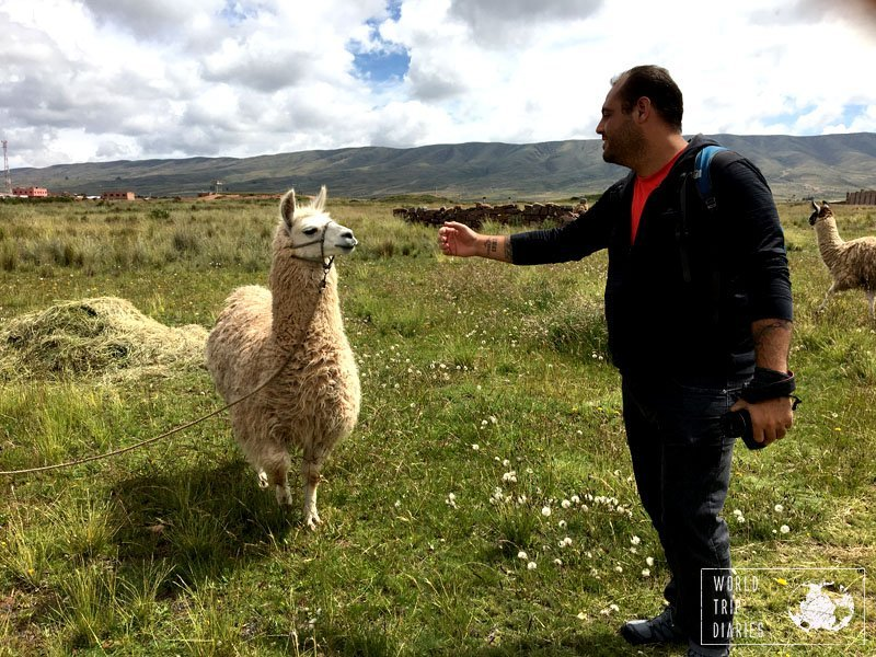 Angelo and a white llama. It was fun seeing those fluffy creatures roaming around.