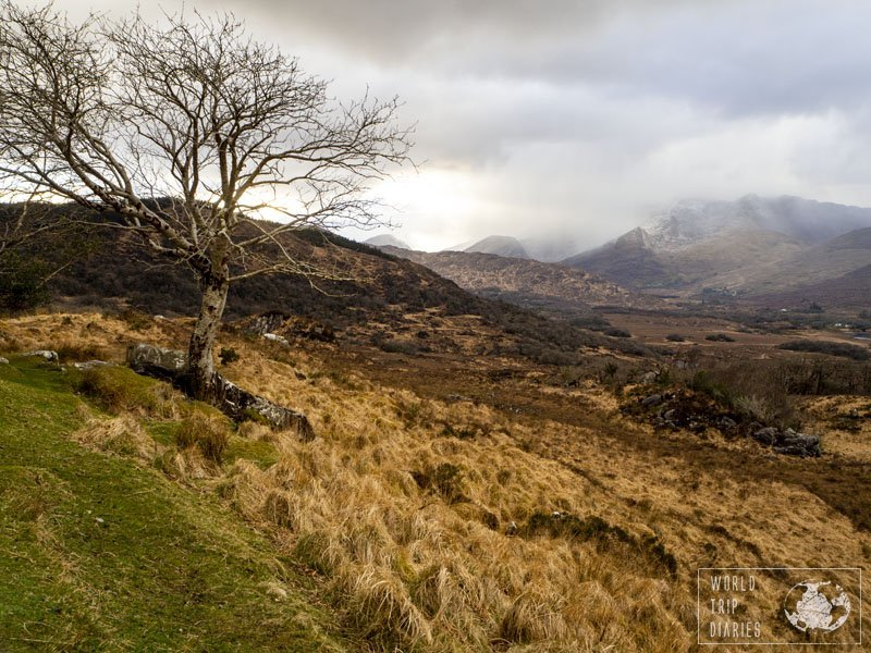 A tree, the mountains behind and the cloudy sky on the top. Lady's view, in Killarney National Park, is part of the Ring of Kerry and it's one of the best views ever! Click for more!
