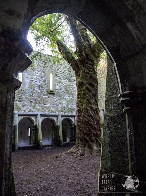 Muckross Abbey, in the Ring of Kerry (Ireland), is one beautiful abbey. It's in ruins, but very well preserved. Click for more
