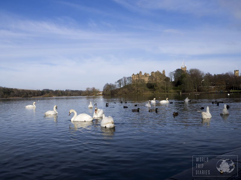 Loch Linlithgow is inhabited by various birds and they give the Palace even more of a fairytale feel. It's my favorite place in Scotland!