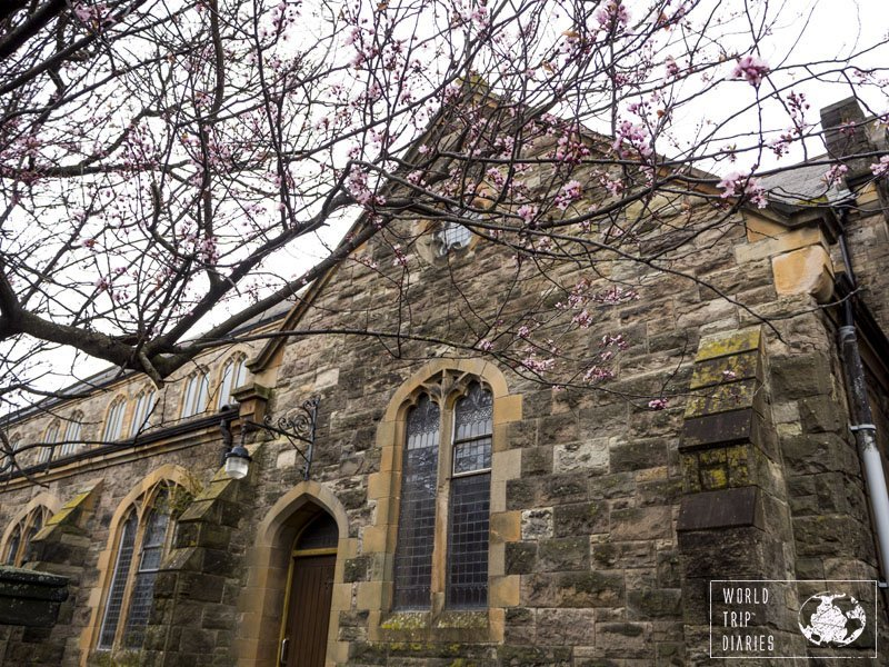 A branch of tree with many pink flower buds coming out in front of a church in Belfast, Northern Ireland. It's a beautiful place, not to be missed! Click for more!