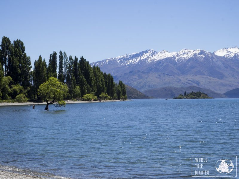 The Wanaka tree sits in side the lake and it's pretty cool to see that single tree there.